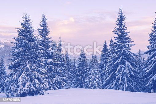 1141614053 istock photo Snow covered pine trees in the winter mountains during a dusk 656794658