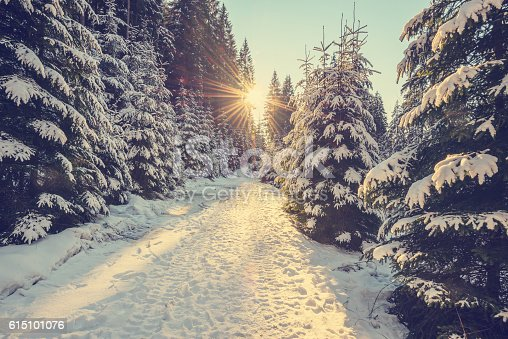 istock Snow covered pine trees on sunset 615101076