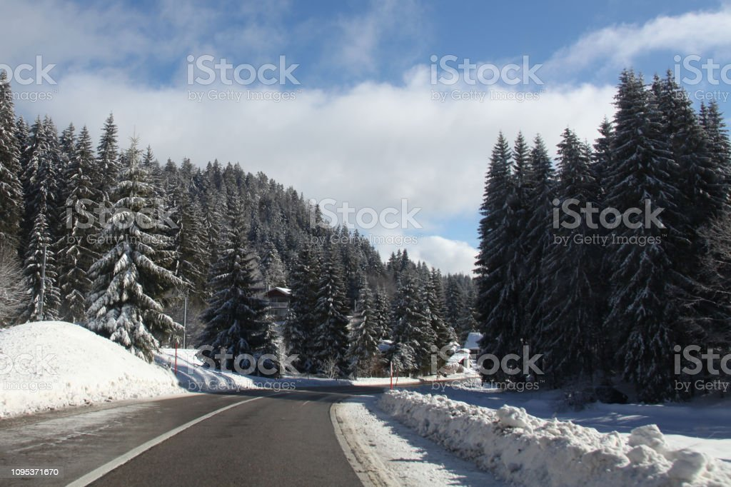 Snow Covered Pines in Switzerland stock photo