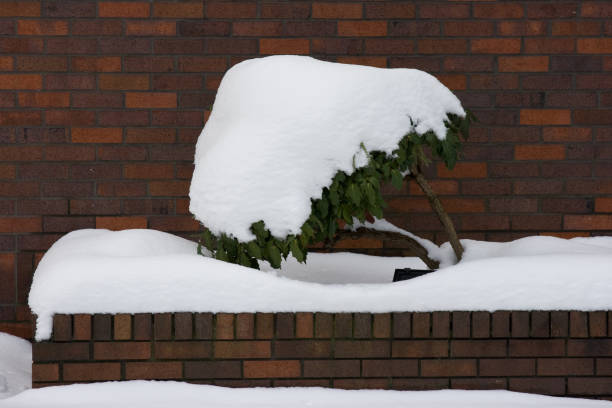Snow covered plant stock photo