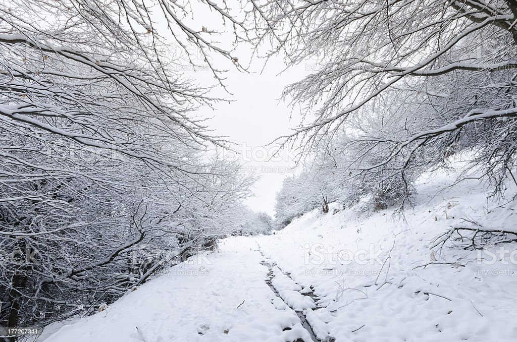 snow covered road among tree branches in the forest royalty-free stock photo