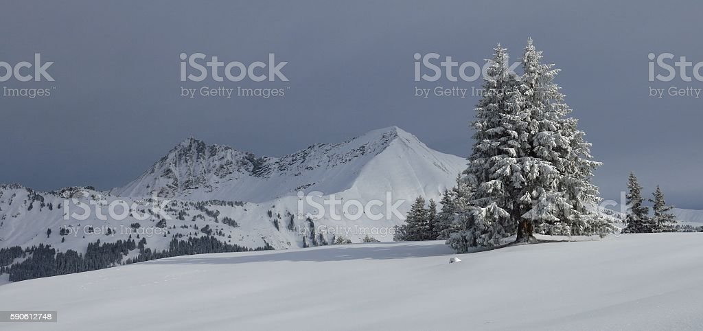 Snow covered tree and mountains stock photo