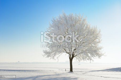 Frost and snow covered tree on a sunny winter day. The Netherlands.