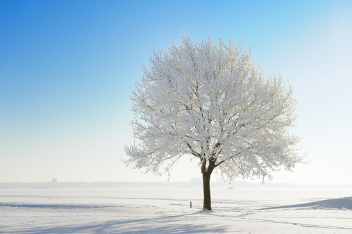 Snow covered tree in winter landscape against blue sky