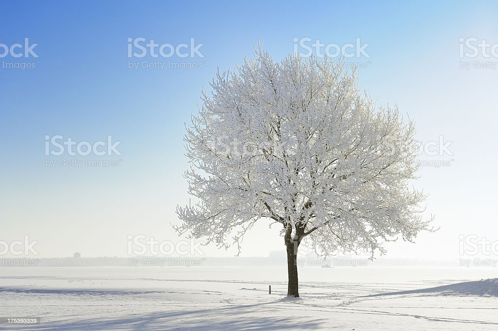 Snow covered tree in winter landscape against blue sky stock photo