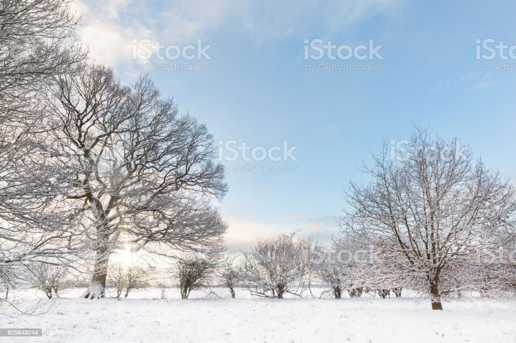 Snow covered tree line with early morning sunrise stock photo