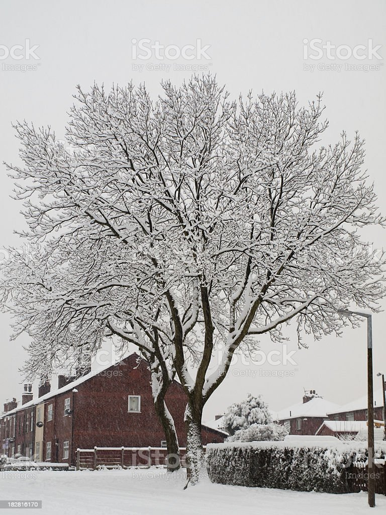Snow covered tree on suburban avenue northern England royalty-free stock photo