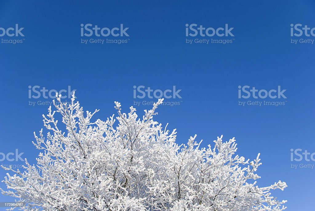 Snow covered tree royalty-free stock photo