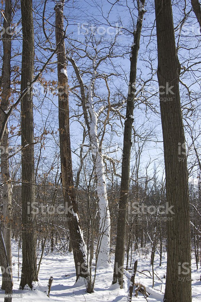 Coperti di neve Tronco d'albero foto stock royalty-free