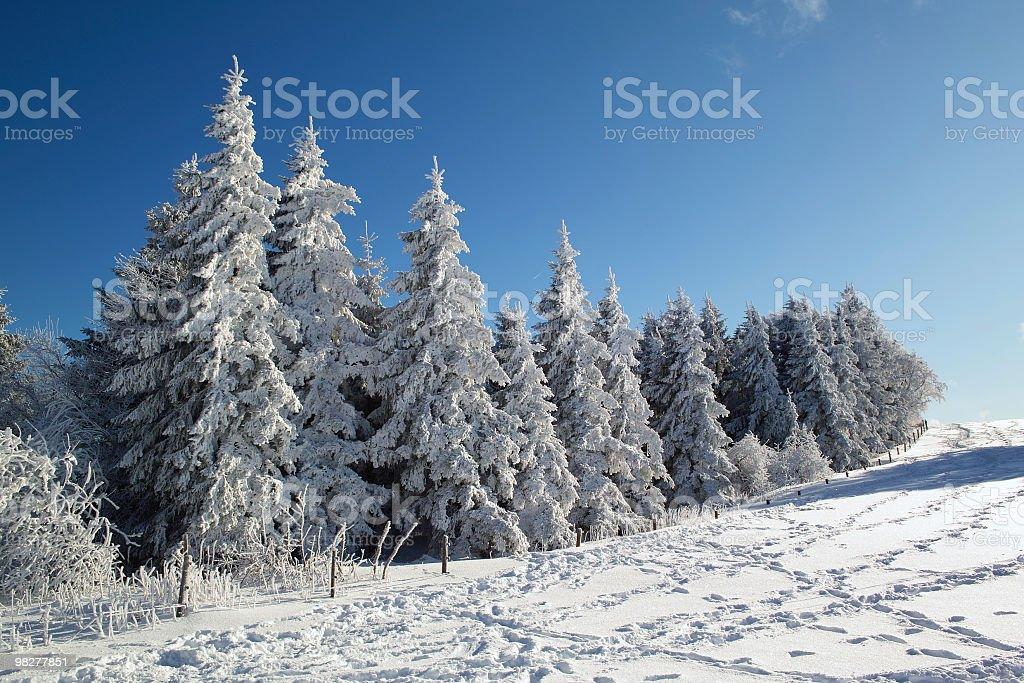 인공눈 덮힘 나무 at 샤우인슬란트 royalty-free 스톡 사진