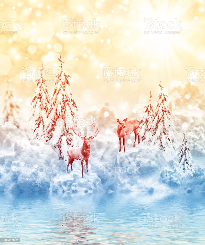 Snow covered trees. deer stock photo