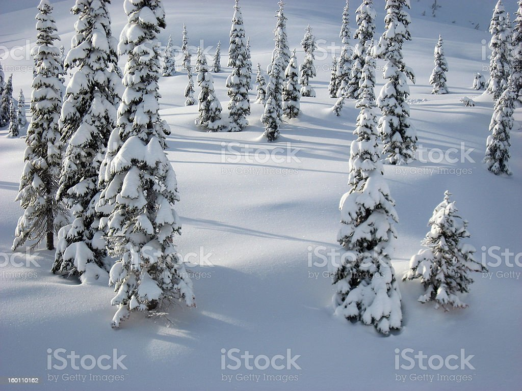 Snow covered trees in a snowy field royalty-free stock photo
