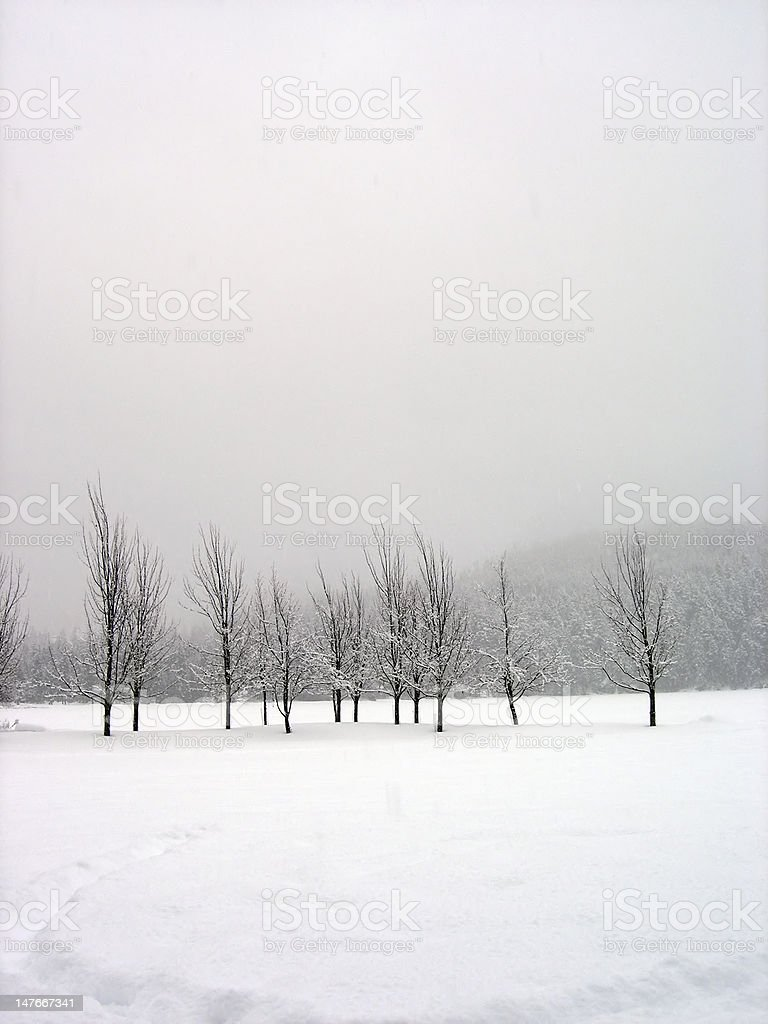 Snow covered trees in midst of a blizzard royalty-free stock photo