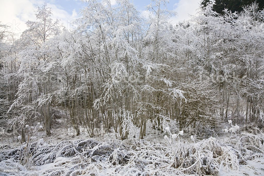 Snow covered trees in winter landscape royalty-free stock photo