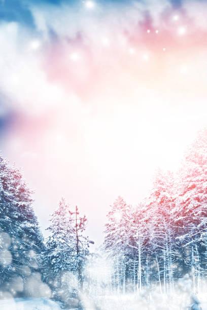 snötäckta träd. - januari bildbanksfoton och bilder
