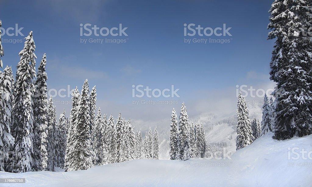 Arbres couverts de neige - Photo