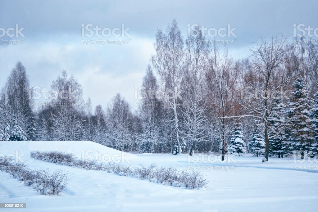 snow covered trees. stock photo