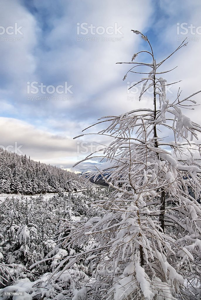 Snow covered trees with blue sky. South Island,New Zealand royalty-free stock photo