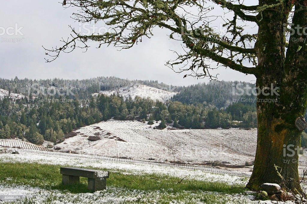 Cubierto de nieve Vineyard foto de stock libre de derechos