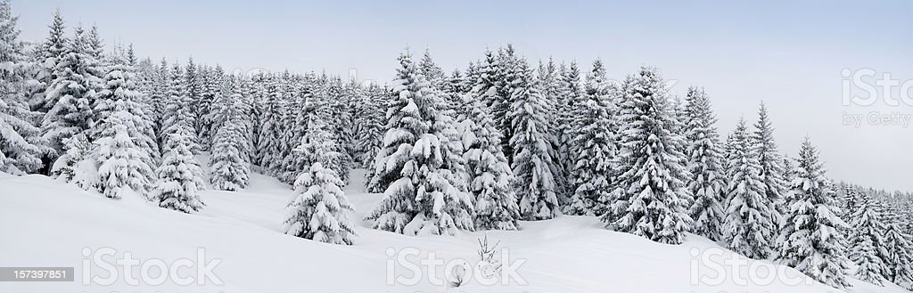 Snow Covered Winter Panorama (XXL) stock photo