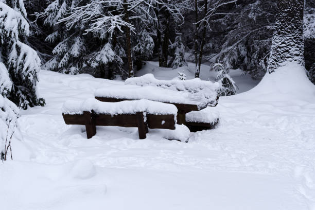 Snow covered wooden picnic table in a winter forest stock photo