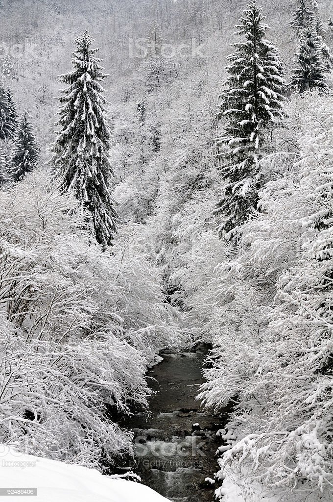 snow covered woods royalty-free stock photo