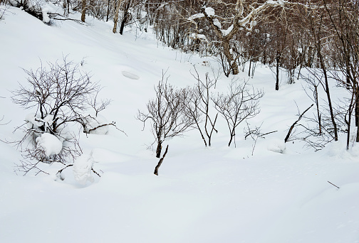 Snow covering in winter forest
