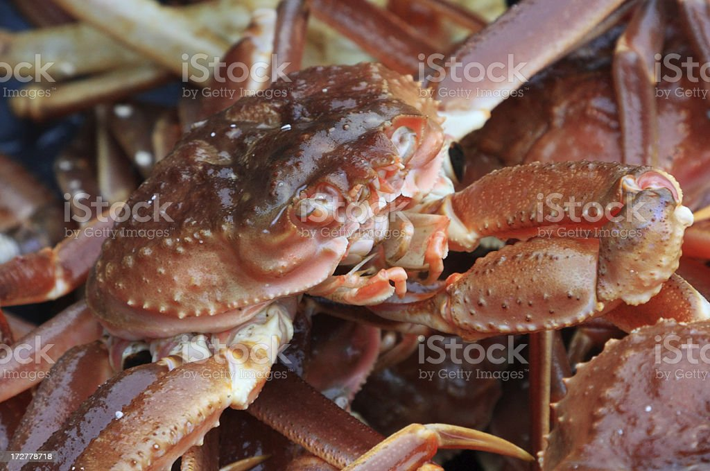 Snow crabs royalty-free stock photo