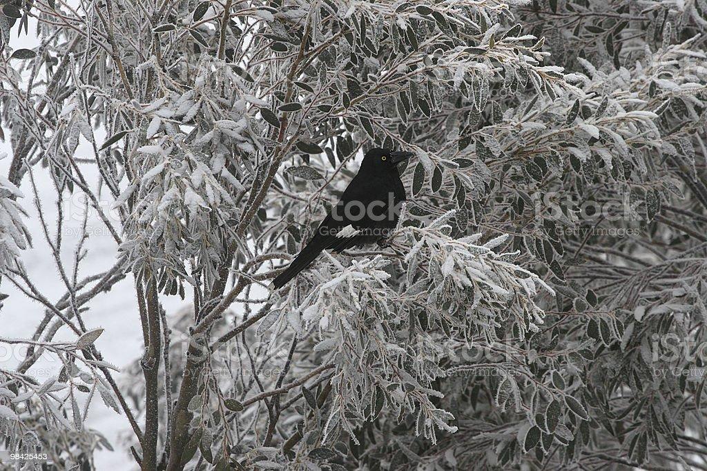 인공눈 까마귀 나무에 royalty-free 스톡 사진