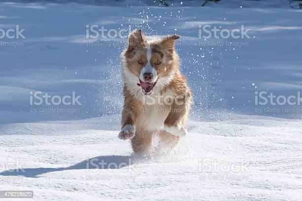 Snow dog picture id476228520?b=1&k=6&m=476228520&s=612x612&h=6png qj5wn8yfb gjtuuerddrco5rx4hl naxk8bwas=