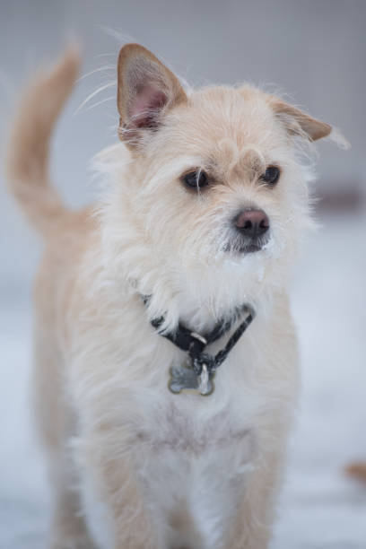 Snow Dog stock photo