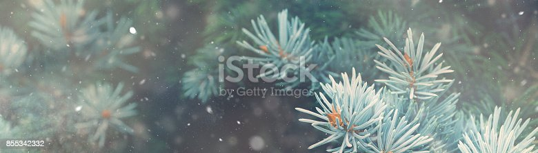 istock Snow fall in winter forest. Christmas nature magic banner 855342332