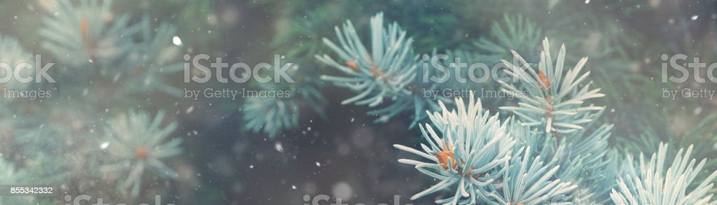 Snow fall in winter forest. Christmas nature magic banner stock photo