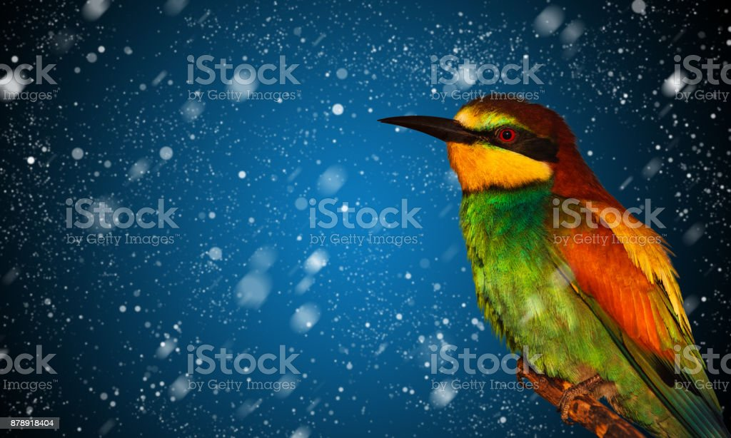 snow falling and colored bird stock photo