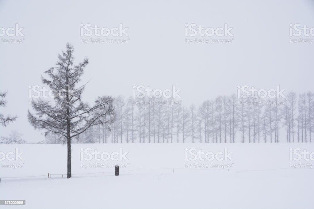 Snow falling hill winter grove.Biei stock photo