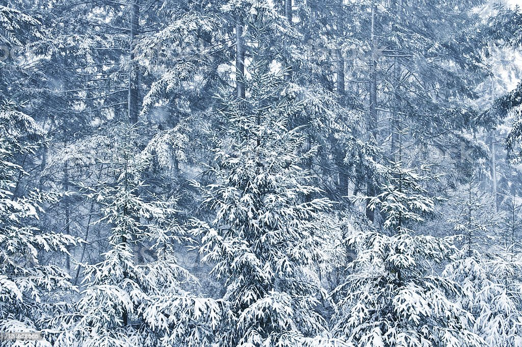 Snow falling in the woods royalty-free stock photo
