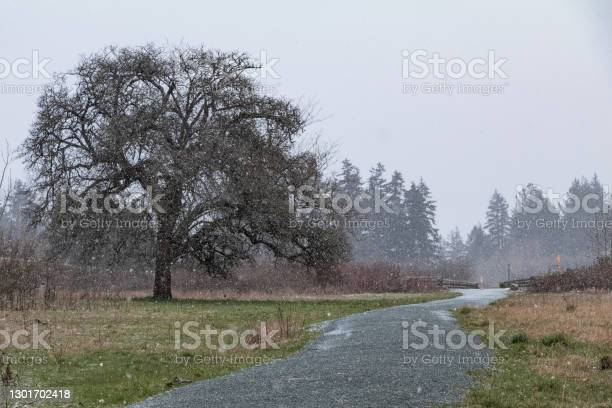 Photo of Snow Falling Lightly On Vancouver Island