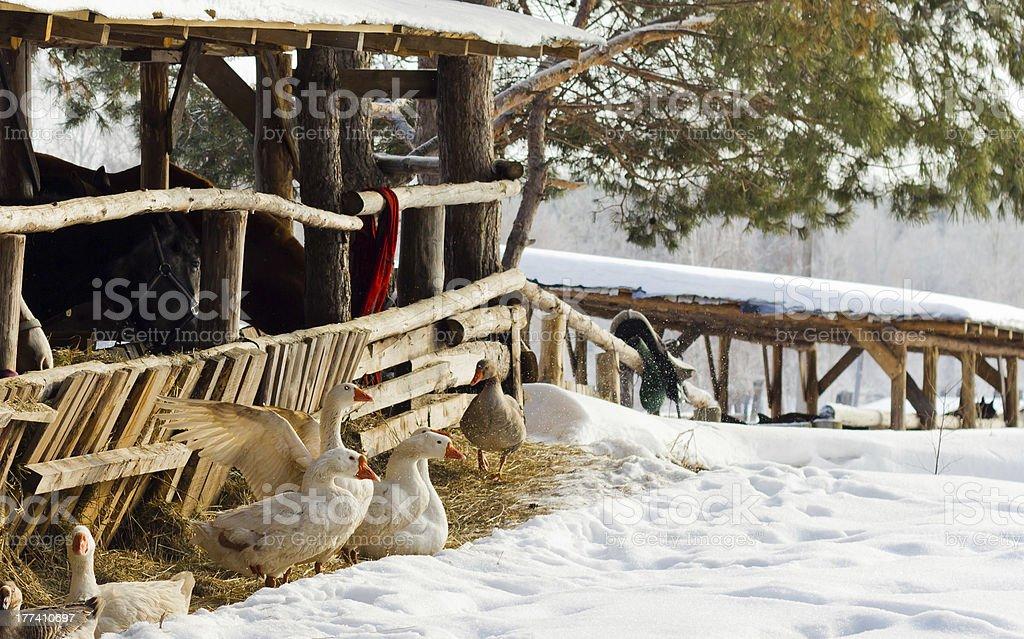 Snow Farm royalty-free stock photo
