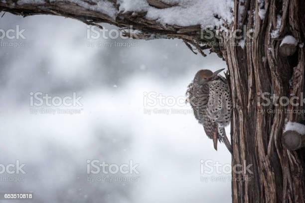 Snow flicker picture id653510818?b=1&k=6&m=653510818&s=612x612&h=opi69ujxs sc7zgxyre7b1zwmjdm pixemh38sl rqu=