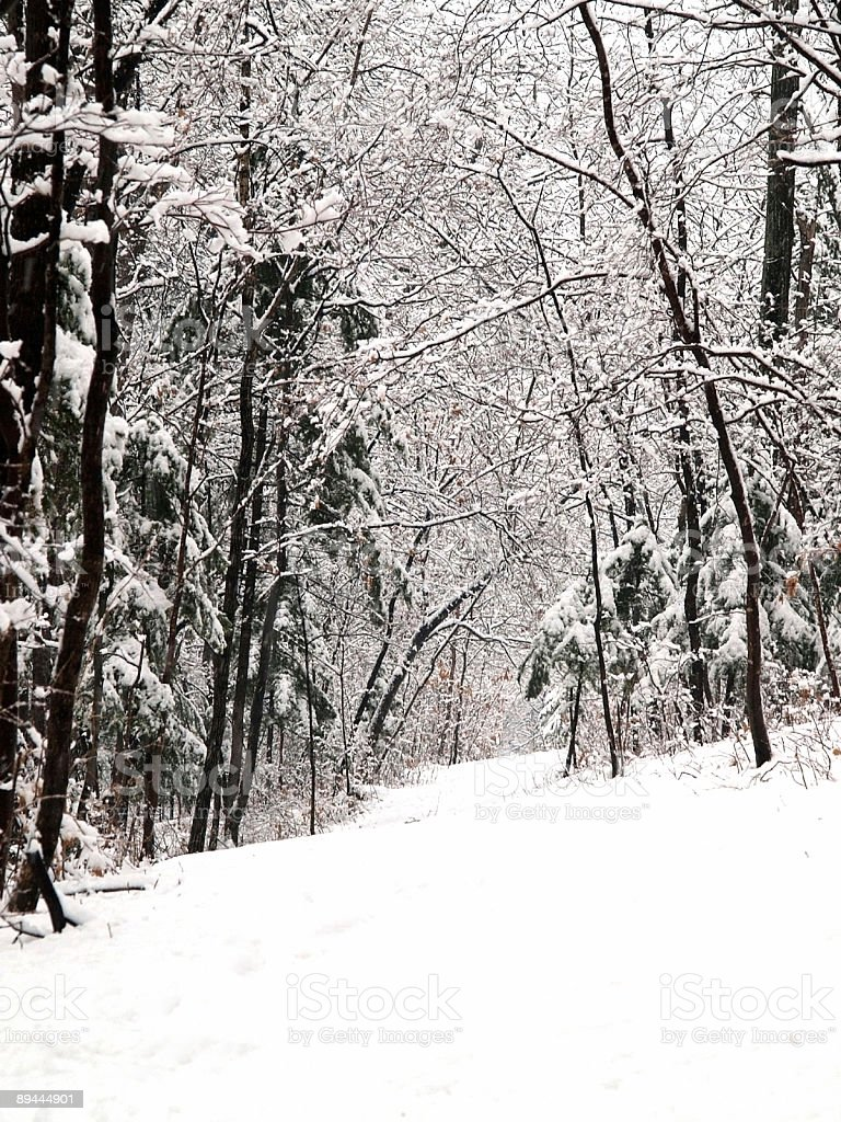 snow forest alley royalty-free stock photo