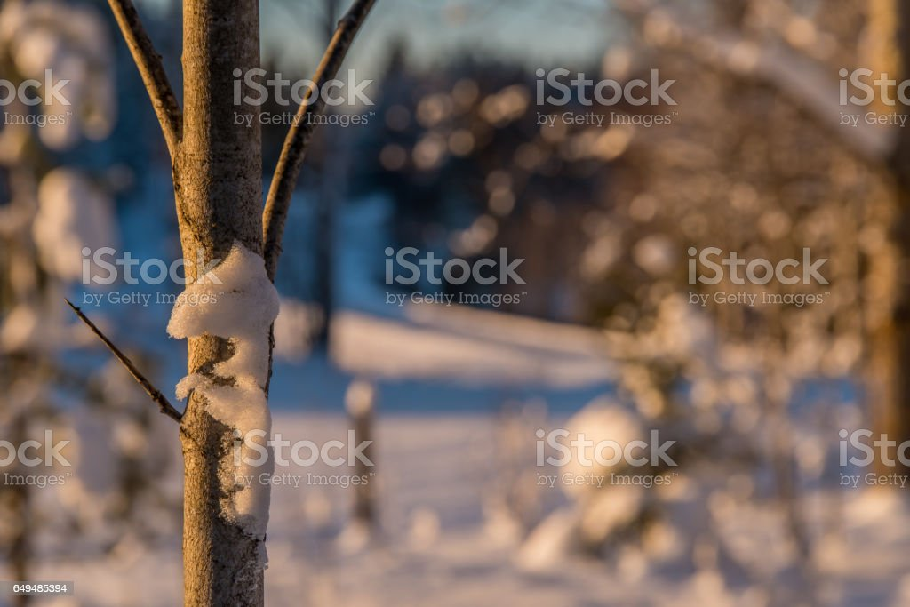 Snow in a tree stock photo