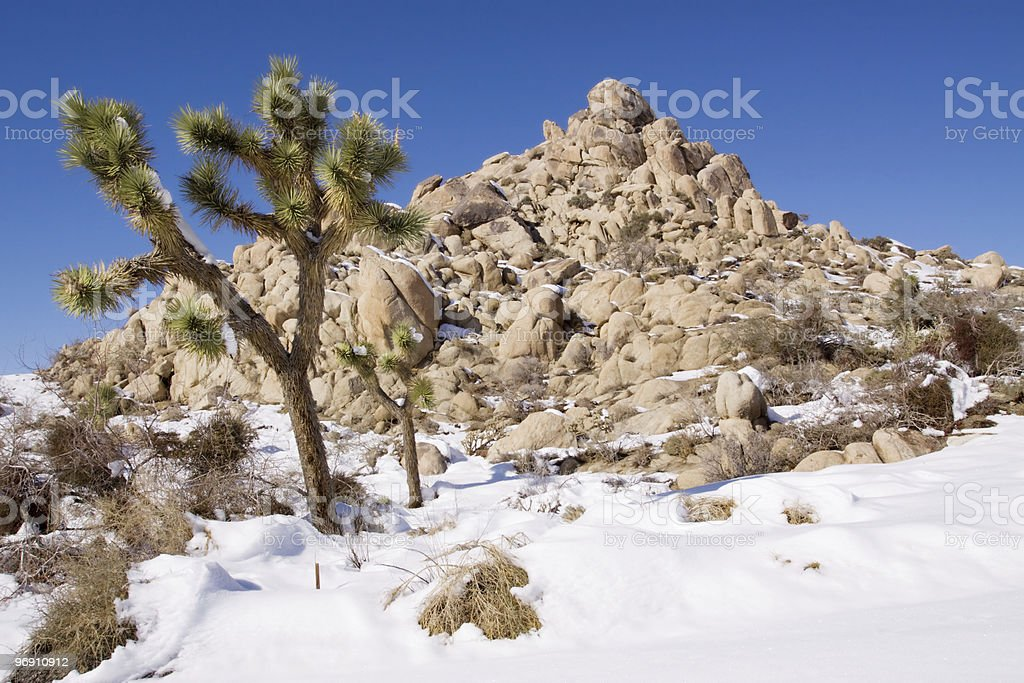 Snow in desert royalty-free stock photo