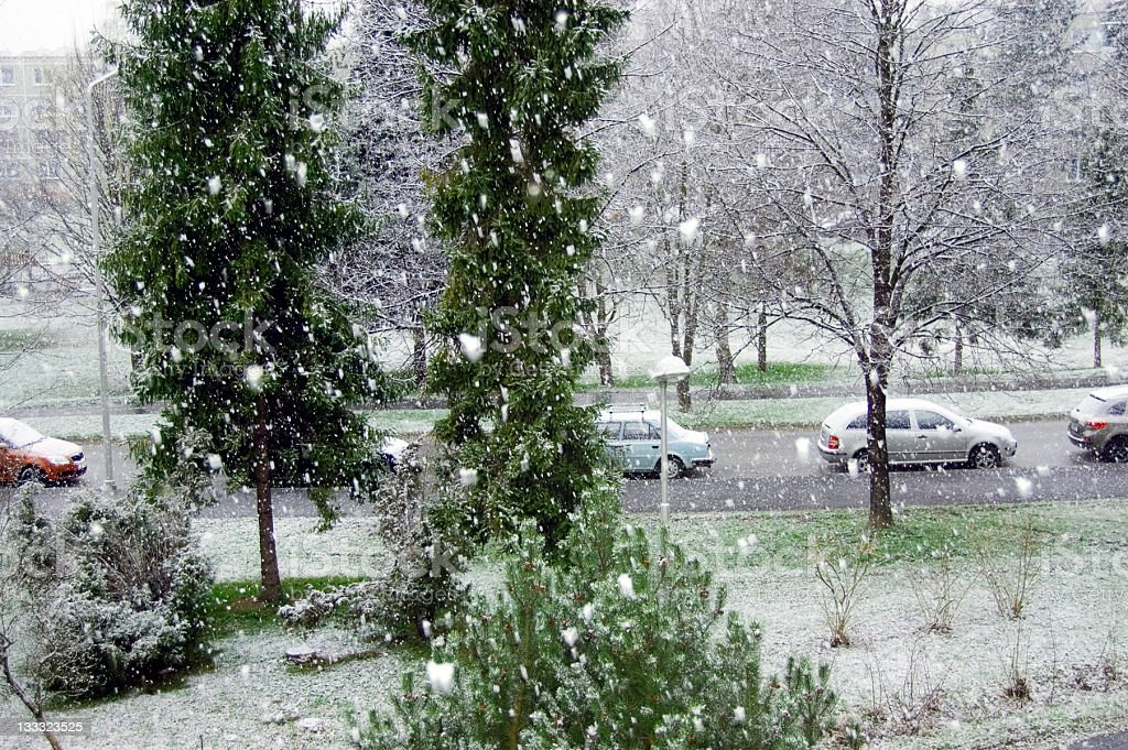 Snow in May royalty-free stock photo