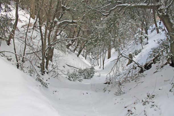 Snow in the forest near Crestline, California stock photo