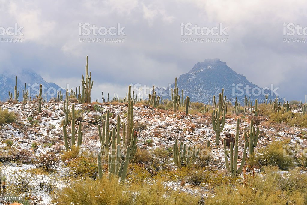 Snow in the Sonoran Desert royalty-free stock photo
