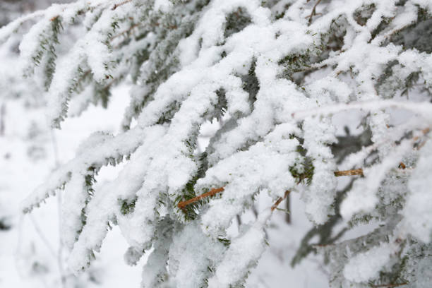 snow in winter Winter in Winterberg, Germany duitsland stock pictures, royalty-free photos & images