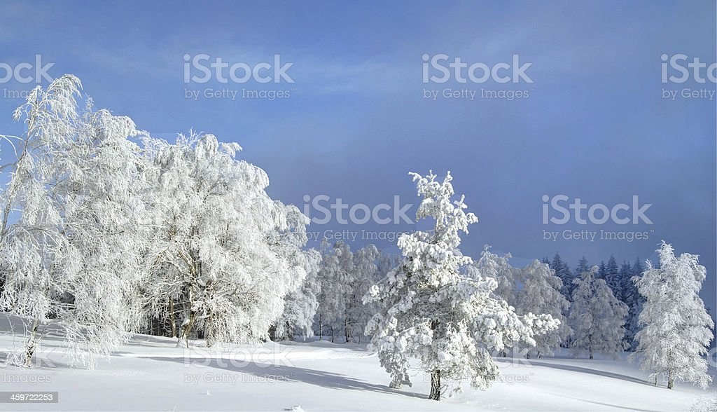 Snow landscape in the Black Forest Germany stock photo