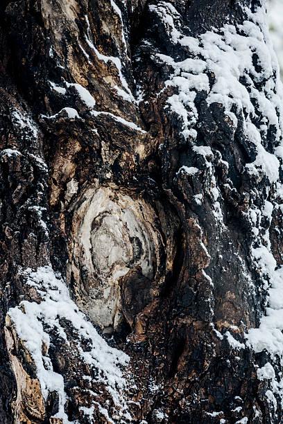 Schnee Landschaft – Foto