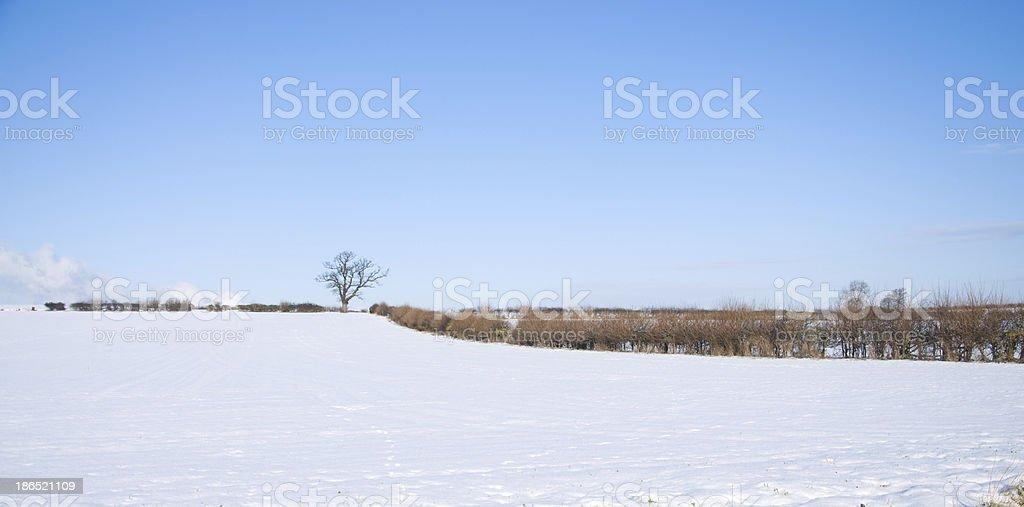 Snow Landscape with tree royalty-free stock photo
