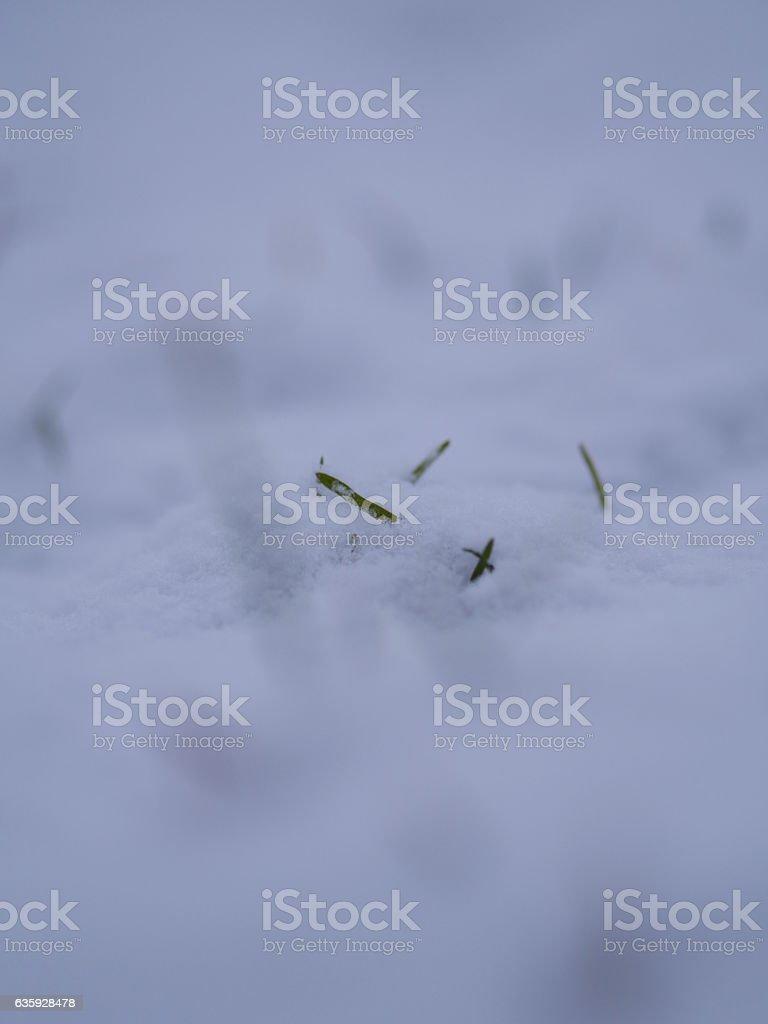 snow lawn stock photo